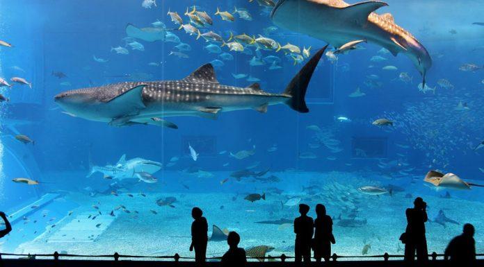 Aquarium De Paris Blue Water
