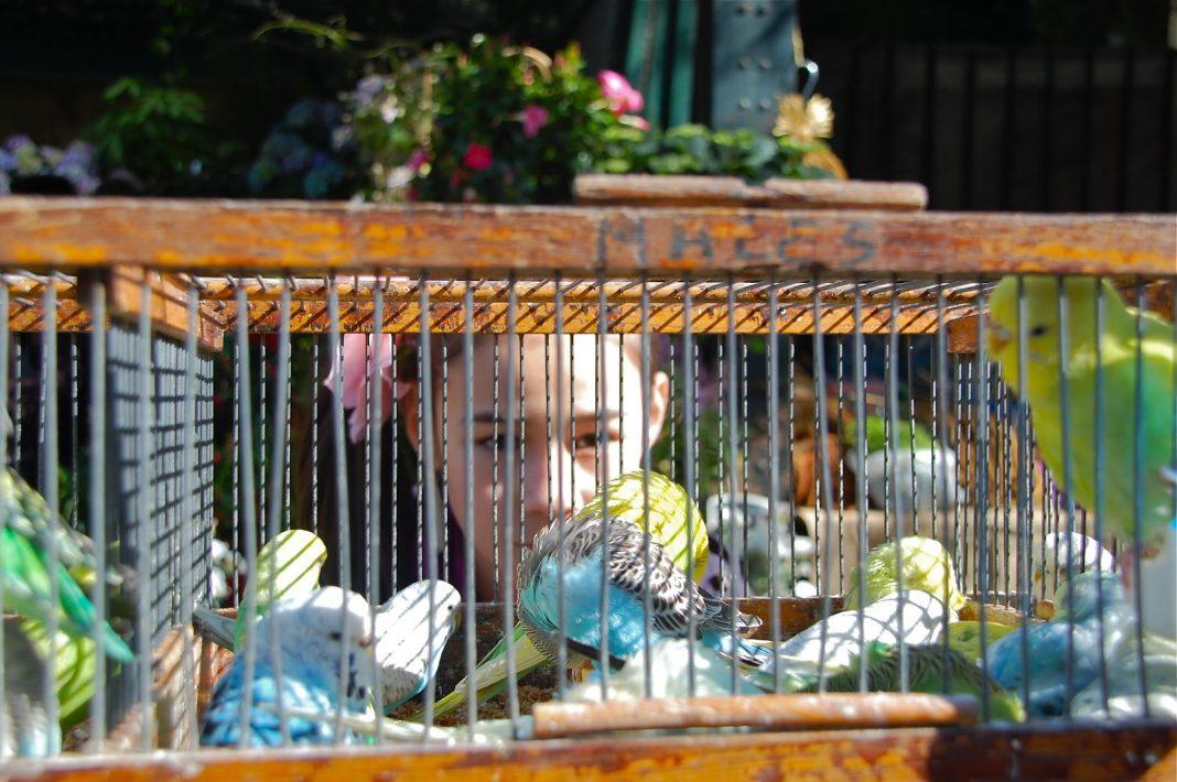Marché Aux Oiseaux Birds And Sun