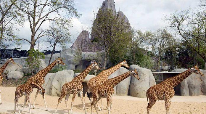 Zoo de Vincennes near Paris